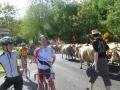 2012 randonnée de Patrick 031